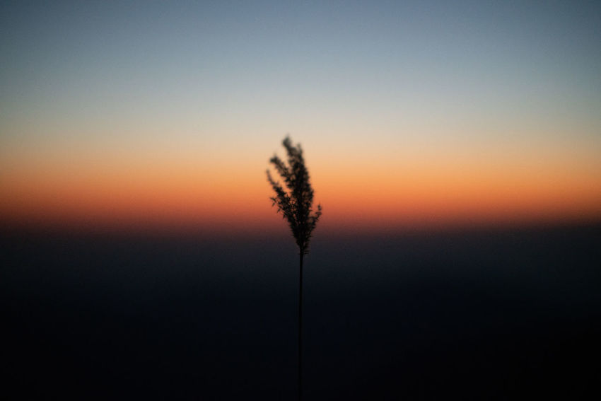 Gradient of the dusk Beauty In Nature Close-up Dusk Growth No People Orange Color Plant Tranquility