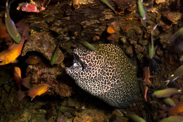 Thailand's underwater world Diving Moray Moray Eel Thailand Travel Underwater World Animal Themes Animal Wildlife Animals In The Wild Beauty In Nature Close-up Day Fish Nature No People Outdoors Sea Life UnderSea Underwater Underwater Photography Underwaterphotography