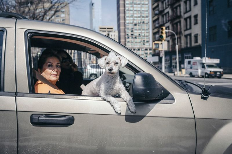 The Street Photographer - 2017 EyeEm Awards Car Dog Pets One Animal Transportation Mode Of Transport One Person Mammal Domestic Animals Real People Looking At Camera City Portrait Architecture One Woman Only Women Day Building Exterior Outdoors Friendship EyeEmNewHere