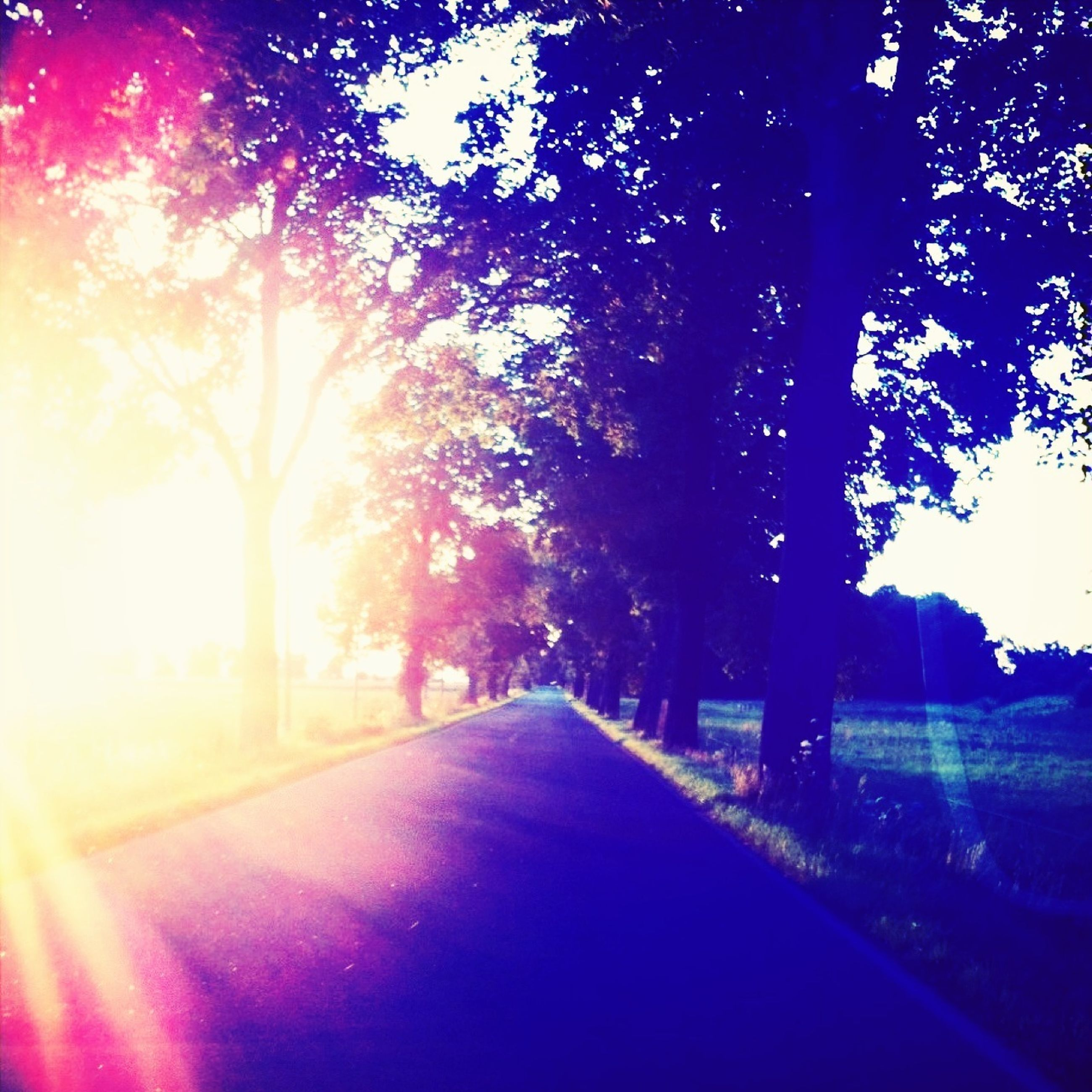 the way forward, tree, road, diminishing perspective, transportation, sunlight, vanishing point, sun, street, sunbeam, lens flare, empty road, tranquility, nature, empty, country road, tranquil scene, sky, long, no people