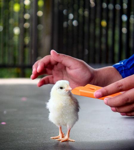 Full length of baby hand holding bird