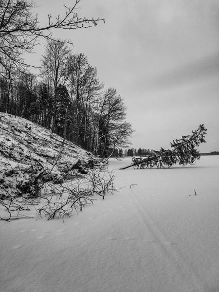 Fallen tree EyeEmNewHere Cloud - Sky Black And White Winter Water Frozen Lake Fallen Tree Nature Outdoors Tranquility Day No People Tree Beauty In Nature Sky Scenics Snow Cold Temperature The Traveler - 2018 EyeEm Awards The Still Life Photographer - 2018 EyeEm Awards The Great Outdoors - 2018 EyeEm Awards The Creative - 2018 EyeEm Awards