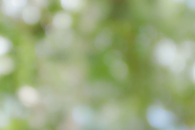 Abstract Abstract Backgrounds Backgrounds Beauty In Nature Close-up Day Defocused Focus On Foreground Freshness Full Frame Green Color Growth Nature No People Outdoors Pattern Plant Selective Focus Tranquility Tree