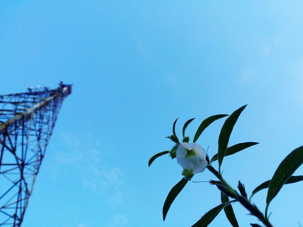Dramatic Angles Flower Tower Blue Sky Evining Dramitic Sky Green Green Green!