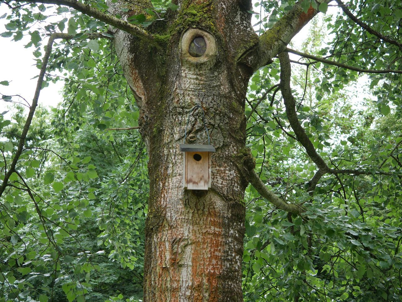 Low Angle View Of Wooden Birdhouse On Tree