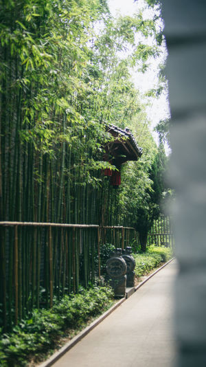 Achitecture Bamboo Documentary Photography Green Green Color Growth Nanchang Nature Outdoors Plant Road Traveling Tree