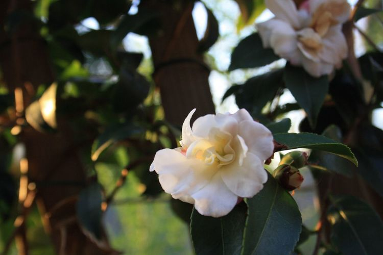 Flower 🌸🌿🌸 Flower Flowers Takingphotos Photograhy Home