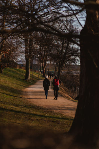 Rear view of people walking on footpath amidst bare trees