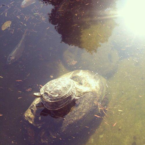 烏龜烏龜翹