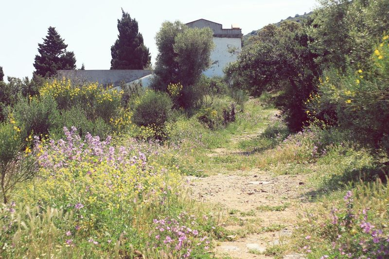 Have a lovely evening :) Simple Quiet Love Wild Flowers Portbou Tranquil Scene Mir1b Old Lens Plant Tree Nature Beauty In Nature