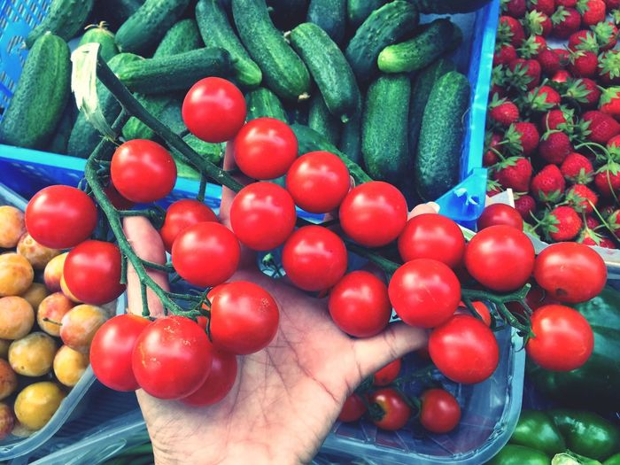 Picking organic fruits and vegetables , cherry tomatos