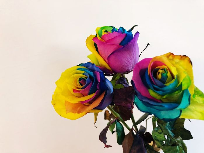 Rainbow Multi Colored Flowering Plant Rosé Flower Rose - Flower Art And Craft Beauty In Nature Close-up Creativity Nature Craft No People