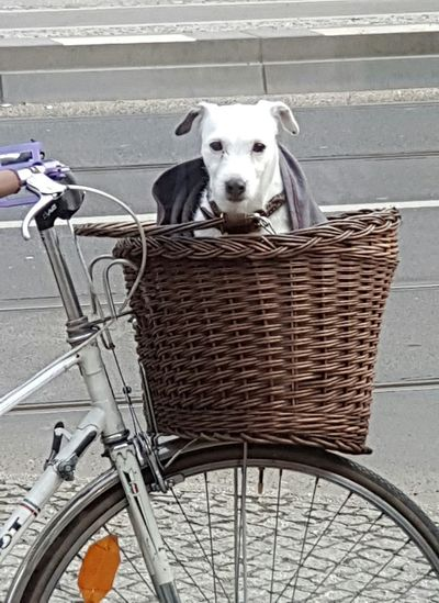 One Animal Dog Domestic Animals Animal Themes Background Cover Dogslife Dog Life Bycicle Bycicle Photography Cycle Bycicles Sitting Animal Sitting Dog Sitting Dogs Waiting Waiting Dogs