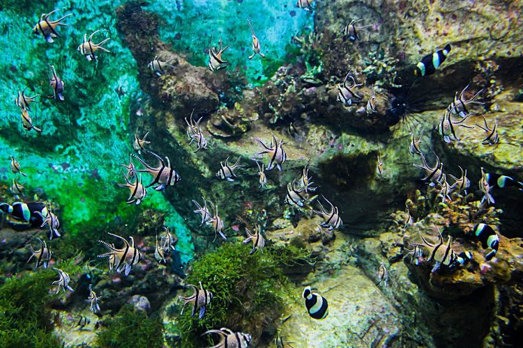 Full frame shot of coral plants
