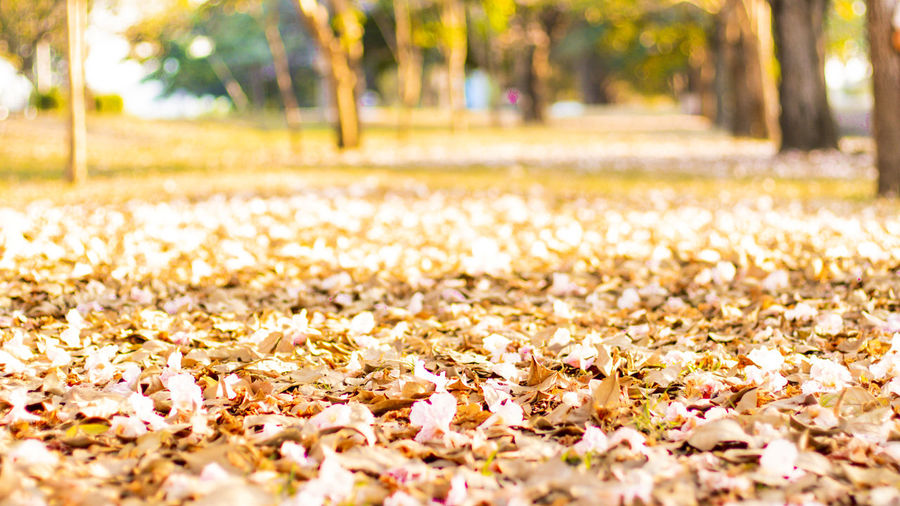 Close-up of autumn leaves in park