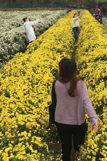 剛好形成一幅有趣的景象 Be. Ready. EyeEmNewHere EyeEm Taiwan Beauty In Nature Landscape Travel Flower Yellow Real People Nature Rear View Women Agriculture Beauty In Nature Day Field Outdoors Lifestyles Plant Sunflower Leisure Activity High Angle View Growth Togetherness Standing Young Women