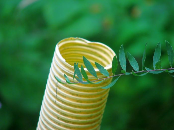 Close-up of yellow tube behind plant