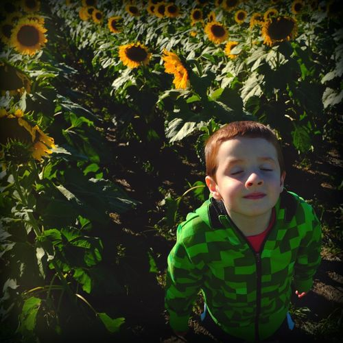 """If I was a sunflower, I would face the sun."" Victor Santino My Best Photo 2014 The EyeEm Facebook Cover Challenge Portrait Of A Friend Eye For Photography Candid Portraits EyeEm Best Shots Beautiful Sunlight Darkness And Light Fall Beauty"