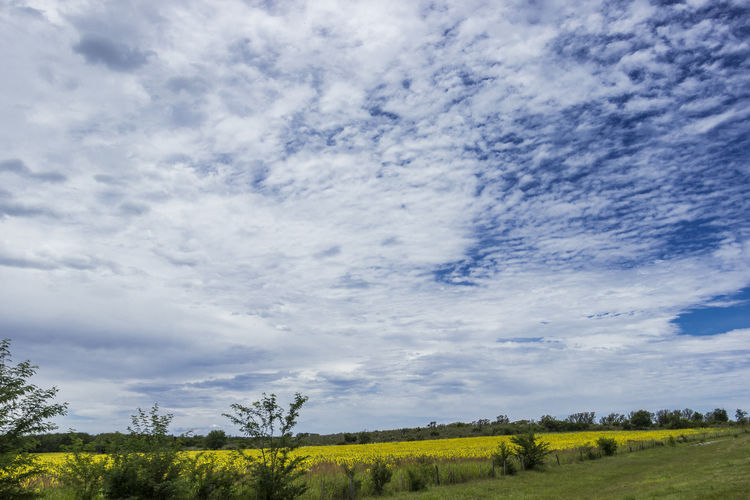 Beauty In Nature Cloud - Sky Day Field Green Color Growth Land Landscape Nature No People Outdoors Plant Rural Scene Sky Sunhead Tranquility Yellow