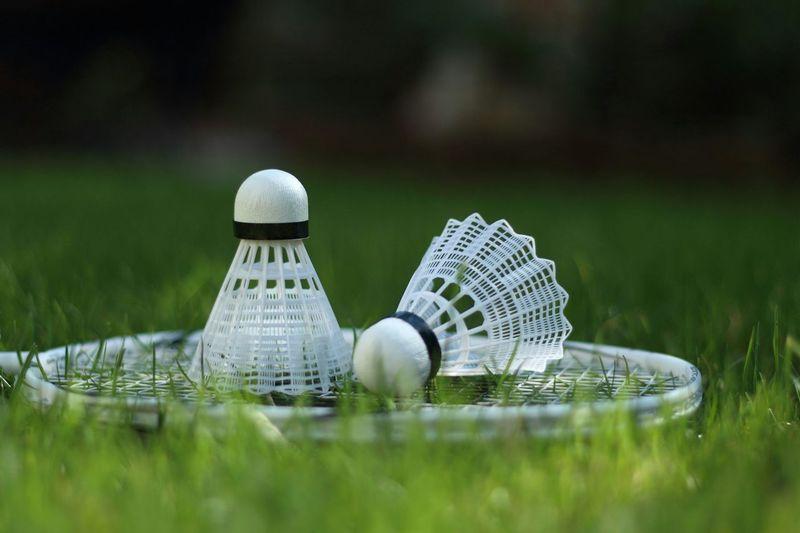 Badminton racket and shuttlecocks on grassy field