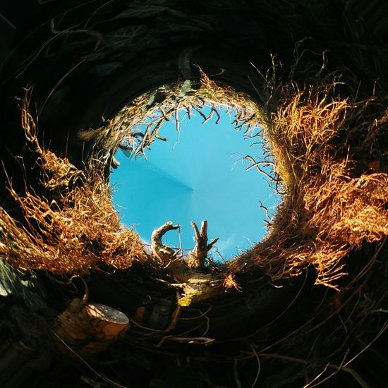 Blue Sky Ring Hole In The Sky No Clouds Housewall Nature Growing On Buildings Edited Photo Tiny Planet Rotation Architektur Winter No People Day Nature Outdoors Close-up