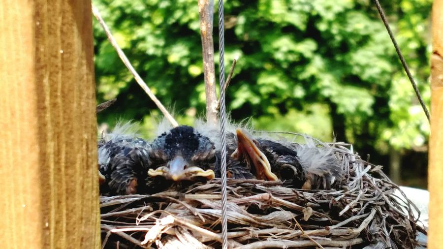 Baby birdies are getting big! One Animal Animal Themes No People Animal Wildlife Outdoors Day Tree Animals In The Wild Nature Close-up The Great Outdoors - 2017 EyeEm Awards Beauty In Nature Bird Spread Wings Growth