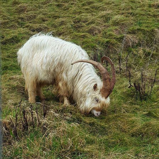 Llandudno, United Kingdom Nature Photography Green Grass EyeEmNewHere Your Ticket To Europe Animal Themes