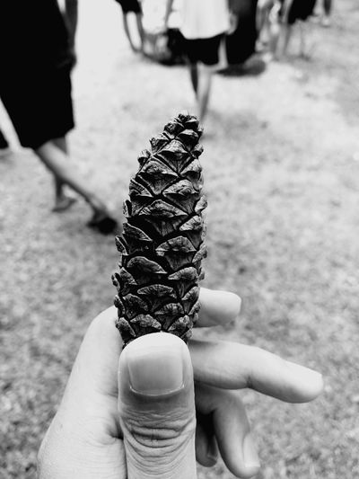 Monocrome Flower Monocrome Pinus Hill Mountain Monochrome Mobilephotography Portrait Photography Photooftheday Hands Outdoors Holidays Jogjakarta INDONESIA Kaliurang first eyeem photo