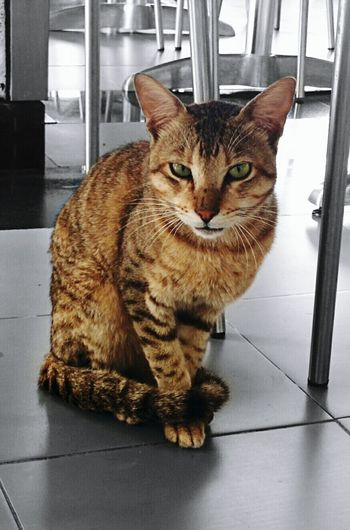 Cat Cat Watching Cat Photography Cat Eyes Cat Pose Posing Cat Nexus 5 Selective Color Selective Coloring
