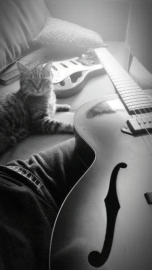 Hanging Out Taking Photos Enjoying Life Guitar Addiction 57Gibson Capo Rescuecat Guitar Addiction Hotel Life Guitar Blackandwhite Coco'sPics MyBoy EyeEm Animal Lover Kitty Guitarcat Capokitty