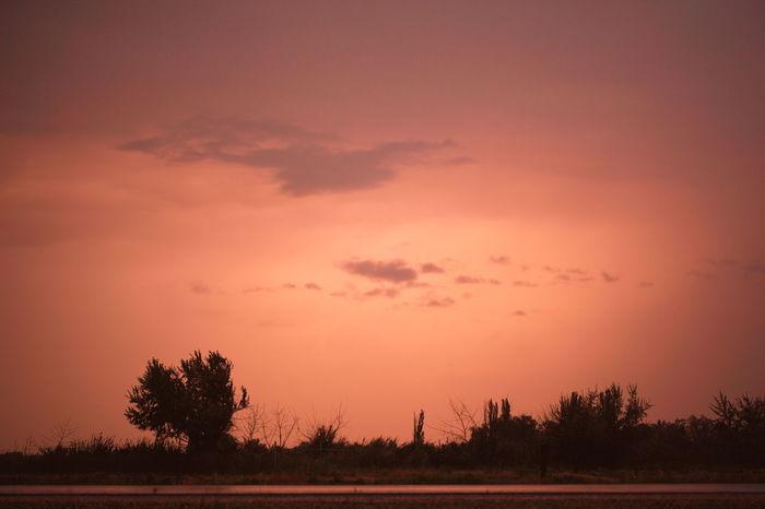 Desert Sunset Beauty In Nature Dark Deserts Around The World Dusk Idyllic Landscape Nature No People Non-urban Scene Orange Outdoors Remote Scenics Sky And Clouds Sunset Silhouettes Tranquil Scene Tranquility Tree Twilight Utah