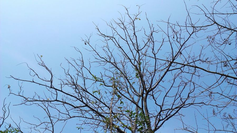 Low angle view of birds perching on bare tree against clear sky