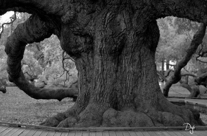 Tree No People Nature Day Close-up Outdoors Rough Blackandwhite Nature Low Angle View Geology Beauty In Nature Growing Textured  Tree Trunk Scenics Tree Tranquil Scene Wood - Material