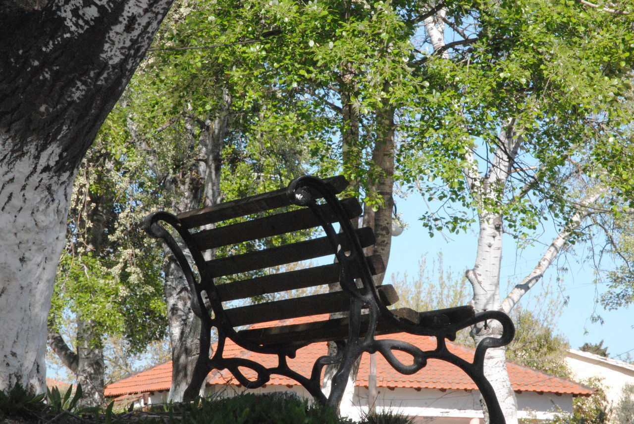 tree, plant, nature, day, seat, bench, no people, park, outdoors, tree trunk, trunk, branch, chair, absence, park - man made space, tranquility, wood - material, forest, park bench, growth