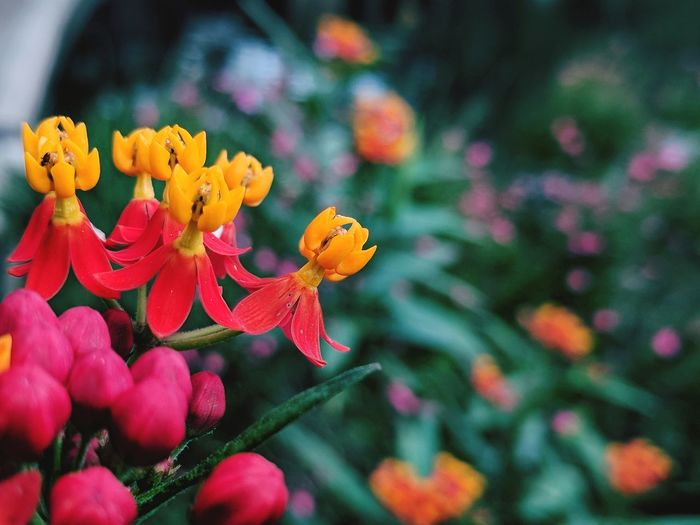 Flower Beauty In Nature Plant Fragility Flower Head Growth Freshness Petal Nature No People Outdoors Close-up Day