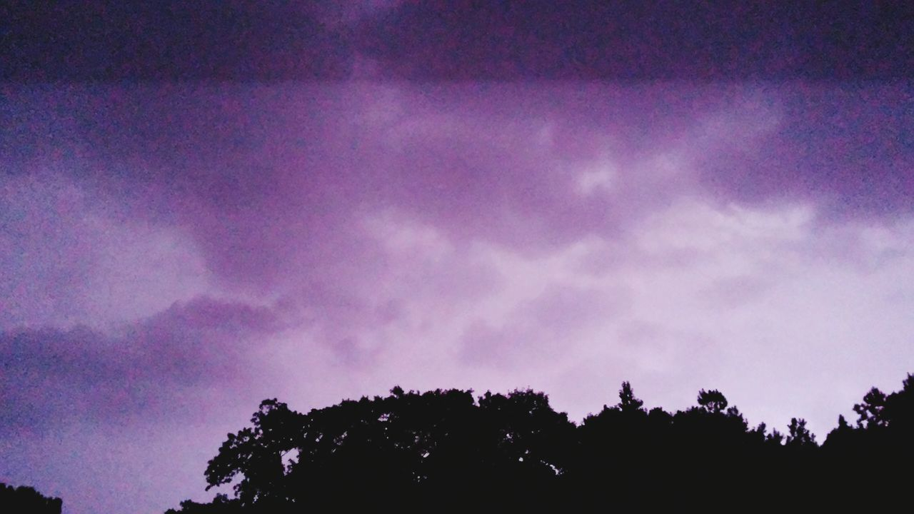 tree, silhouette, beauty in nature, low angle view, nature, scenics, sky, tranquility, outdoors, purple, tranquil scene, no people, night, multi colored