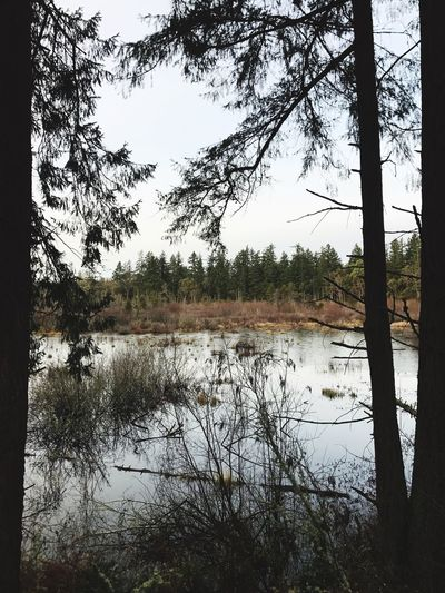 Finding New Frontiers Tree Nature Water Tranquility Scenics Outdoors Beauty In Nature No People Sky Landscape Forest Marsh