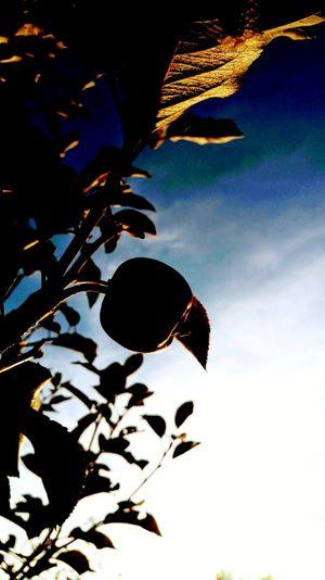 Leaf Sunset