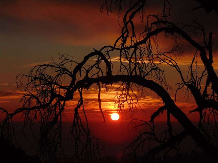 The sunset Nature Beauty In Nature Beauty Of Nature Cloud - Sky Colors Of Sunset Glory Of Sunset Sunset Sunset And Trees Sunset Mood The Old Tree Tranquility