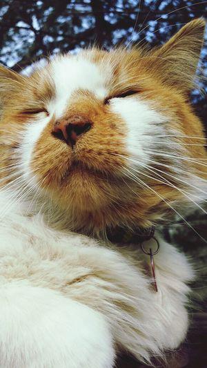 George Sunbathing I Love My Cat Eyem Cute Cats