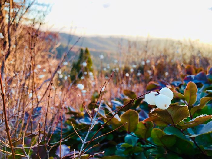 Berries and Hills Rik Franze Plant Beauty In Nature Nature Flower Growth Close-up Focus On Foreground Flowering Plant Freshness Tranquility Environment Landscape Outdoors