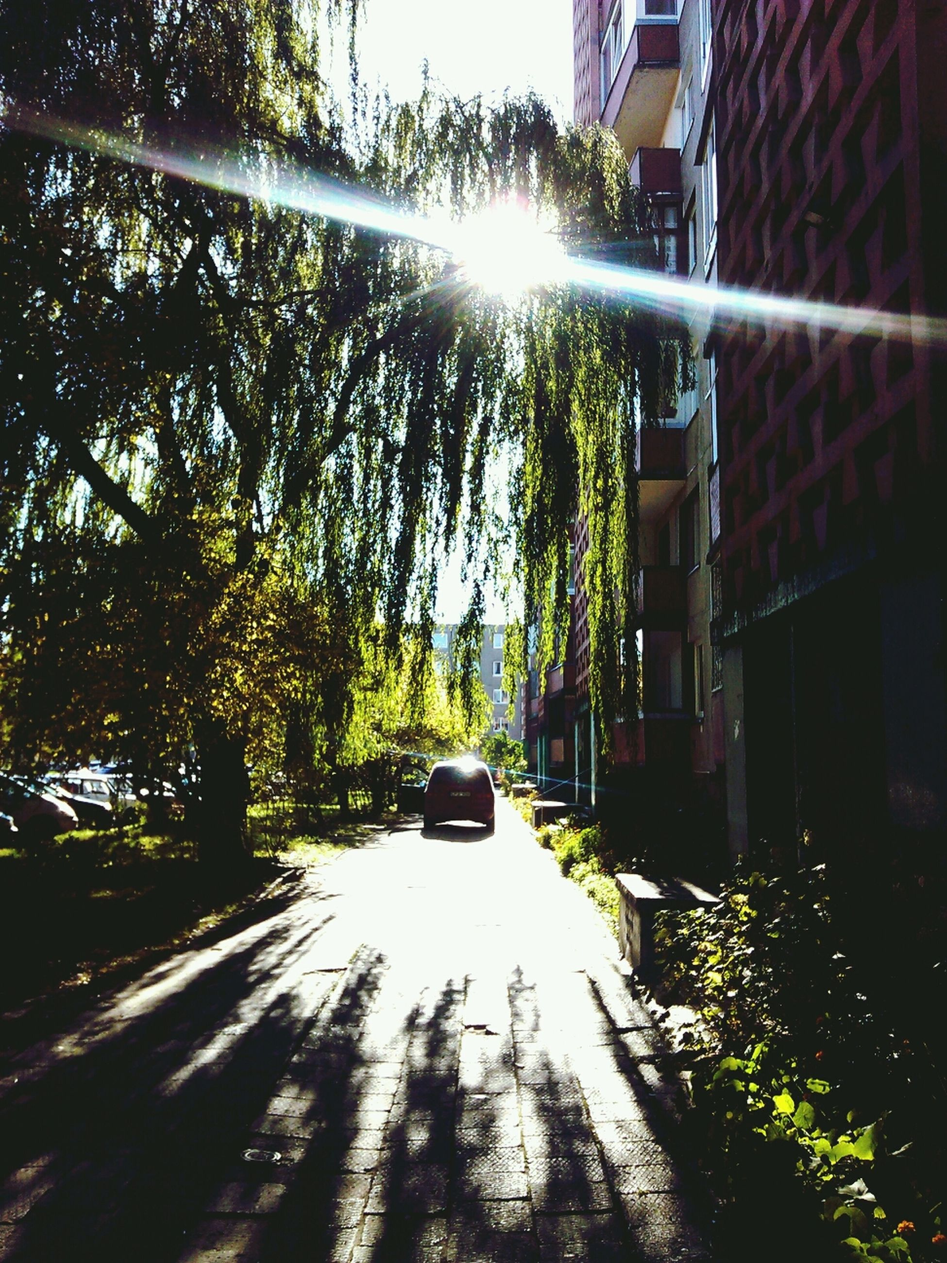 tree, transportation, building exterior, built structure, architecture, the way forward, street, sunlight, road, car, land vehicle, street light, mode of transport, sunbeam, sun, city, day, outdoors, lens flare, diminishing perspective
