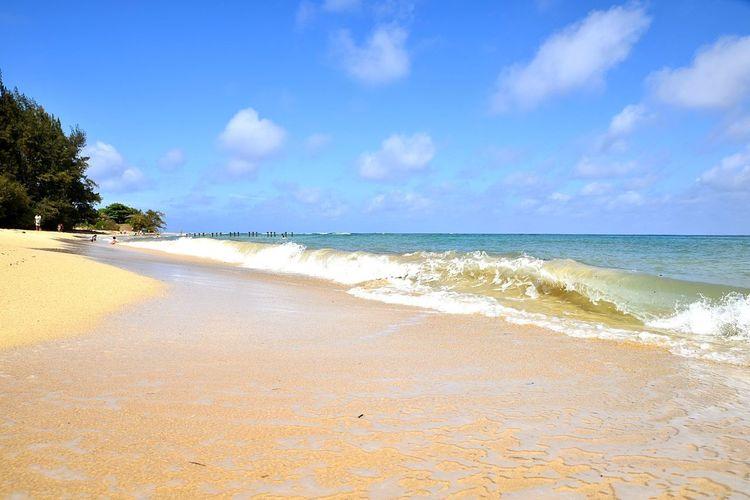 shorebreak EyeEm Nature Lover Eyeemphotography Nikond750 Ocean Waves Hawaii Oahu Laie EyeEmNewHere Crash Pacific Ocean Water Wave Tree Sea Beach Beauty Sand Blue Summer Water's Edge Tropical Tree