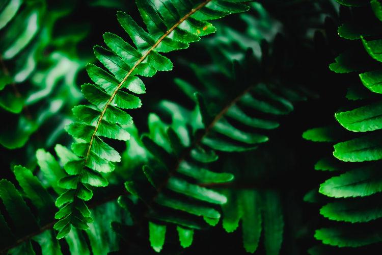 Full frame shot of fern in forest