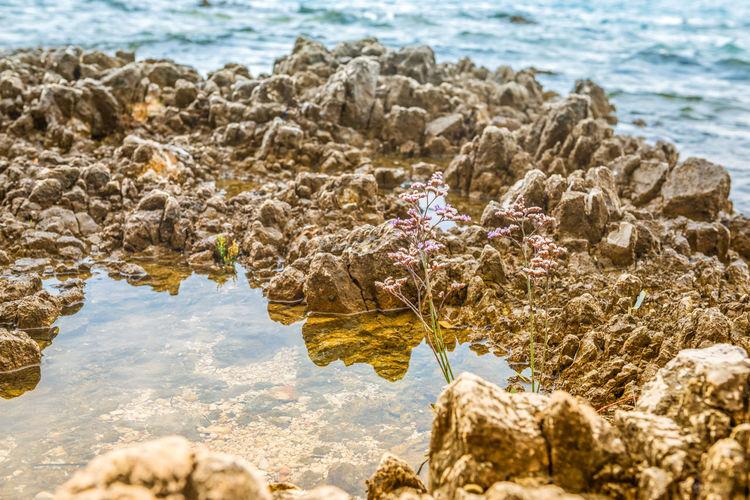 Beautiful rocky beach with lonely flower in istria, croatia
