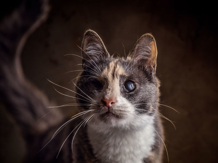 Injured domestic Cat Animal Themes Close-up Day Domestic Animals Domestic Cat Feline Indoors  Mammal No People One Animal Pets Portrait Whisker