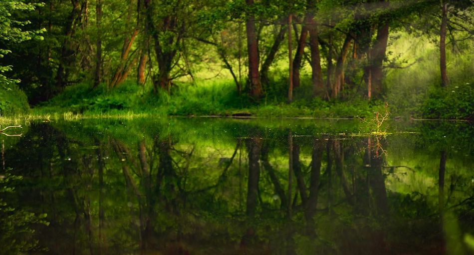 Fairytale gone Green EyeEm Best Shots First Eyeem Photo Silence Reflection Tree Plant Water Tranquility Lake Beauty In Nature Forest Green Color Tranquil Scene Nature Scenics - Nature No People Growth Grass Outdoors Swamp Idyllic