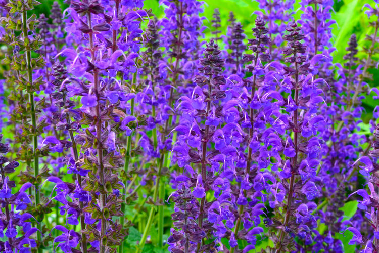Close-up of purple flowers blooming outdoors
