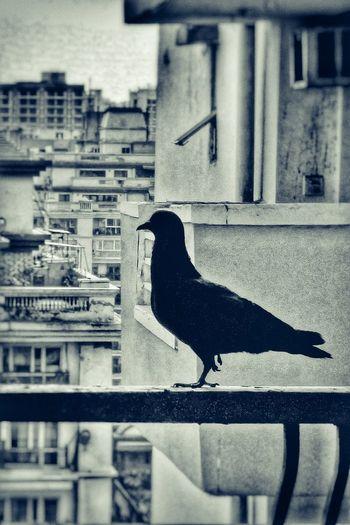 Close-up of bird perching on city