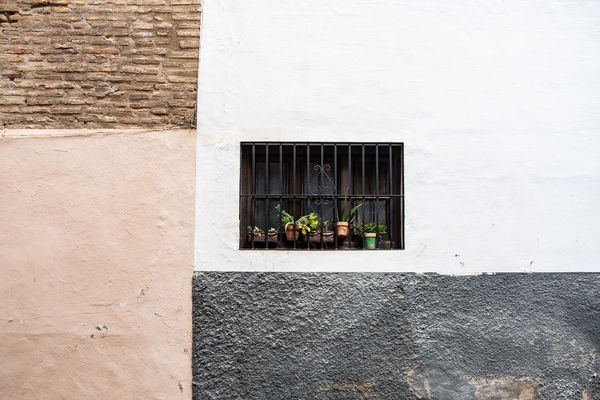 Granada Minimalist Minimalist Architecture Textures and Surfaces The Week on EyeEm Wall Architecture Building Building Exterior Built Structure Day Domestic Flower Pot Minimal Minimalism Minimalistic Nature No People Outdoors Plant Potted Plant Wall Wall - Building Feature Window Window Frame